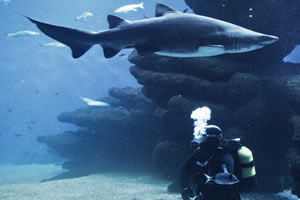 Diving with sharks in Palma Aquarium