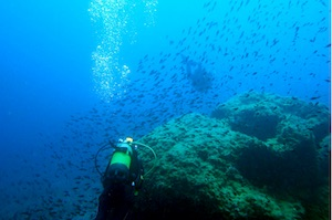 Diving in Palma - West Coast Divers